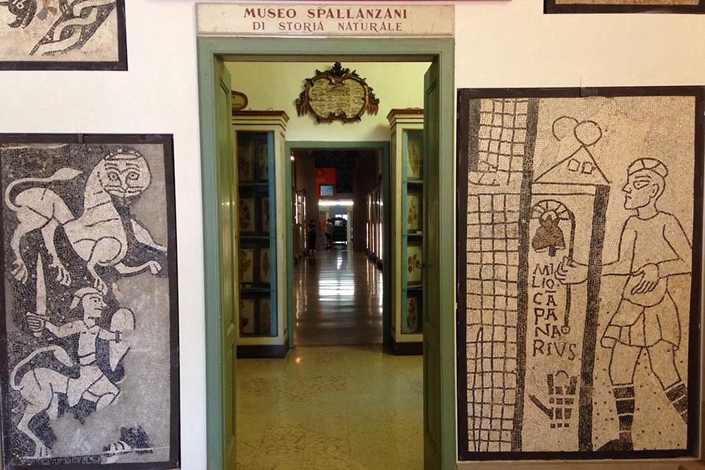 reggio emilia museo
